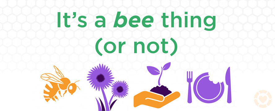 Why should you care about Pollinators [Infographic] | ecogreenlove
