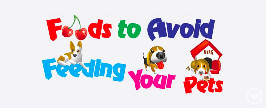 Foods to Avoid feeding your Pets [Infographic] | ecogreenlove