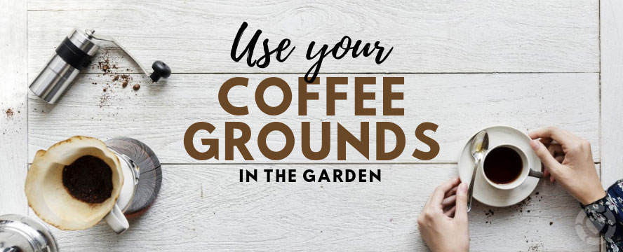 Use your Coffee Grounds in the Garden [Infographic]