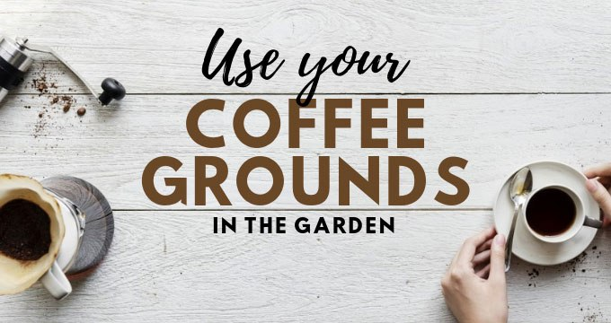 Use your Coffee Grounds in the Garden [Infographic] | ecogreenlove