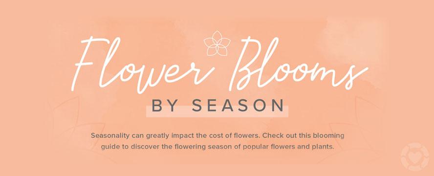 Flower blooms by Season [Visual]