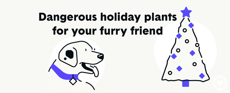 Dangerous Holiday Plants for Pets [Visual] | ecogreenlove