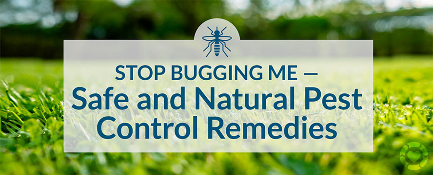 Safe and Natural Pest Control Remedies [Visual] | ecogreenlove