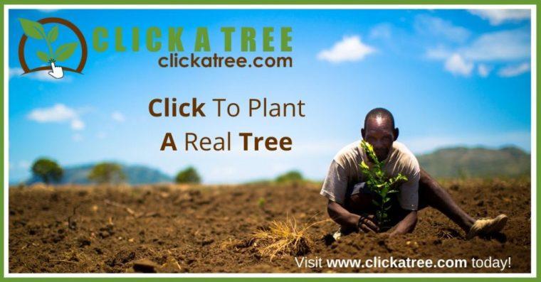 clickatree planting tree