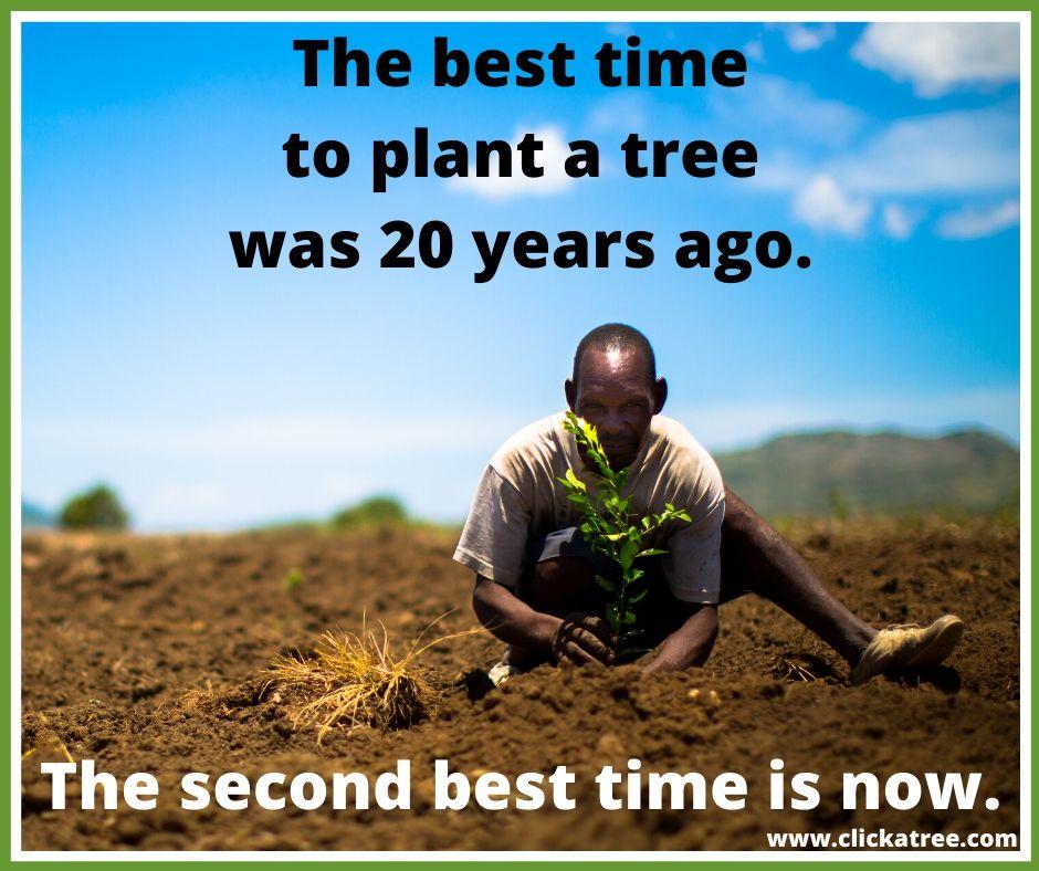 planting tree clickatree