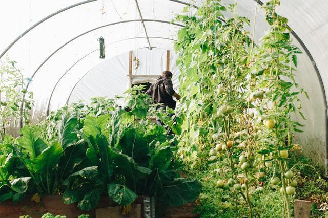 Gardening Tips to Heed This Summer | ecogreenlove