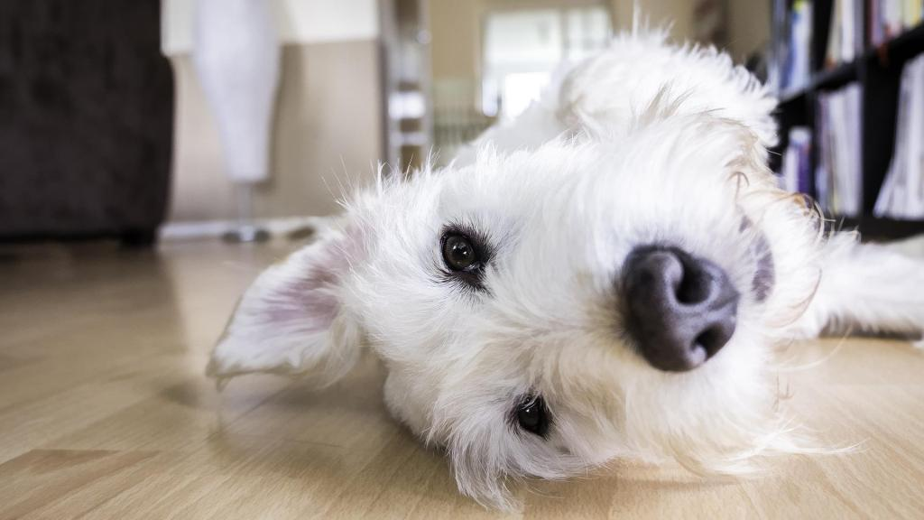 Eco-friendly house cleaning tips if you own a pet   ecogreenlove