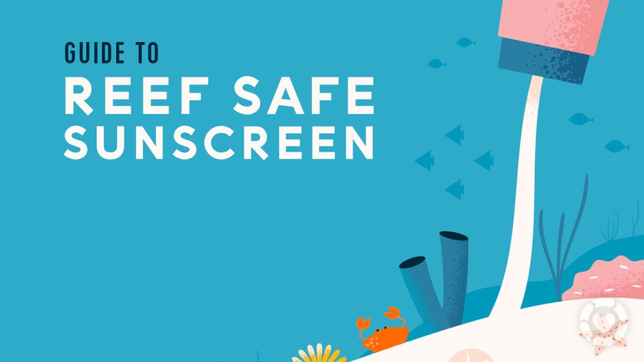 Reef Safe Sunscreen Guide [Visual] | ecogreenlove
