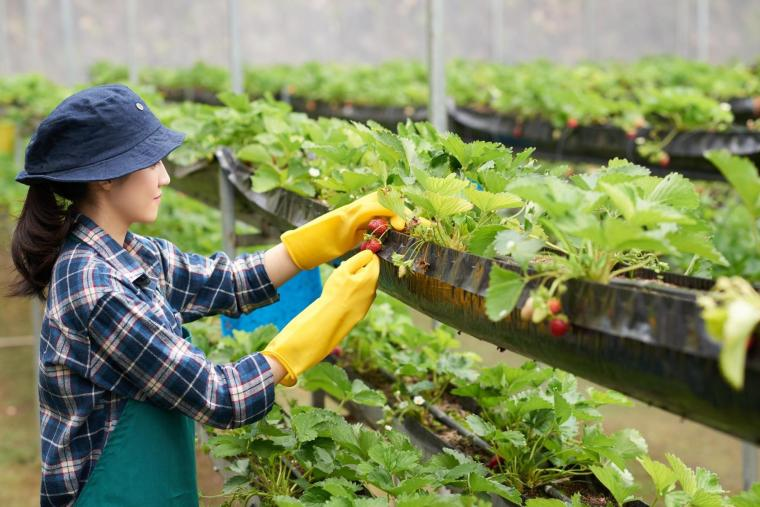Amazing Advantages of Vertical Gardening   ecogreenlove