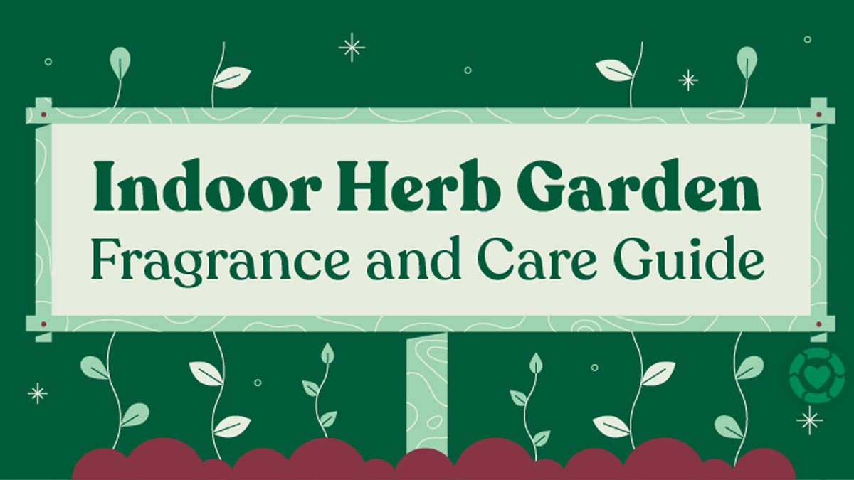 How to Make your own Fragrant Herb Garden [Visual]