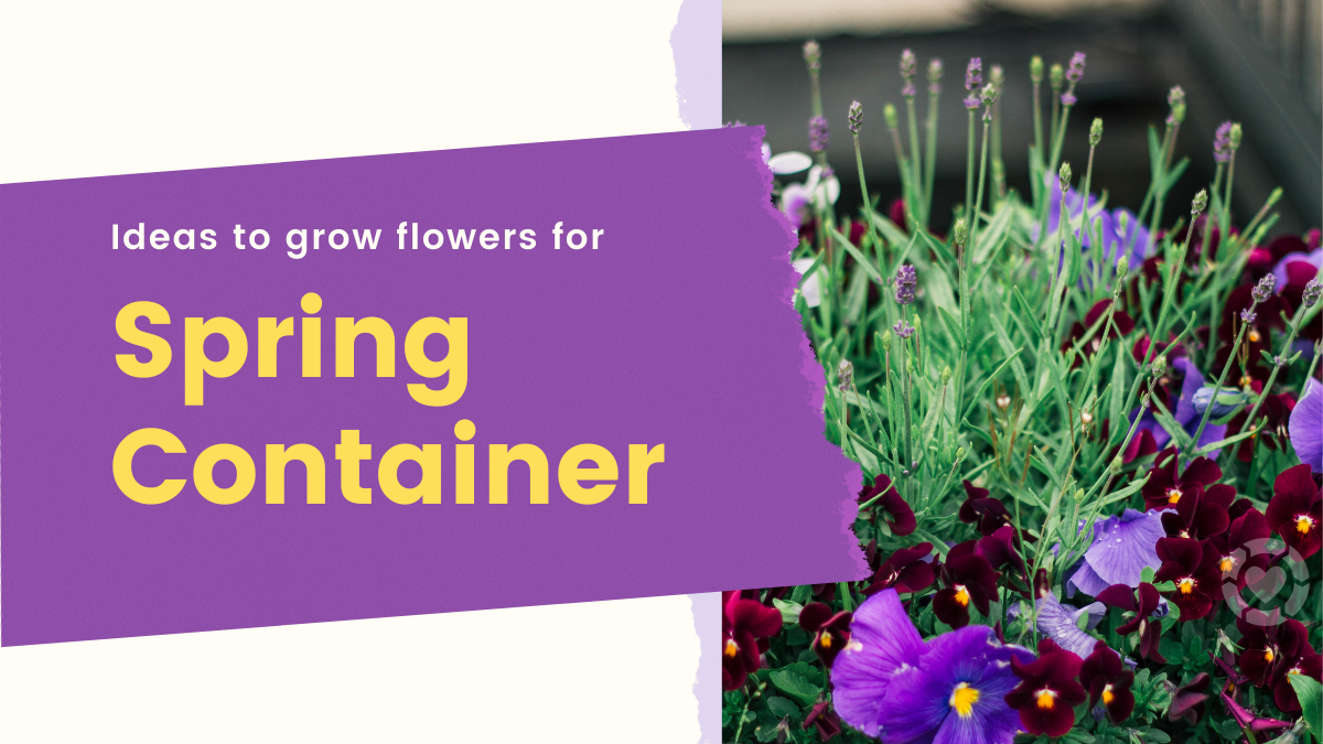 Ideas to Grow Flowers for Spring Containers | ecogreenlove