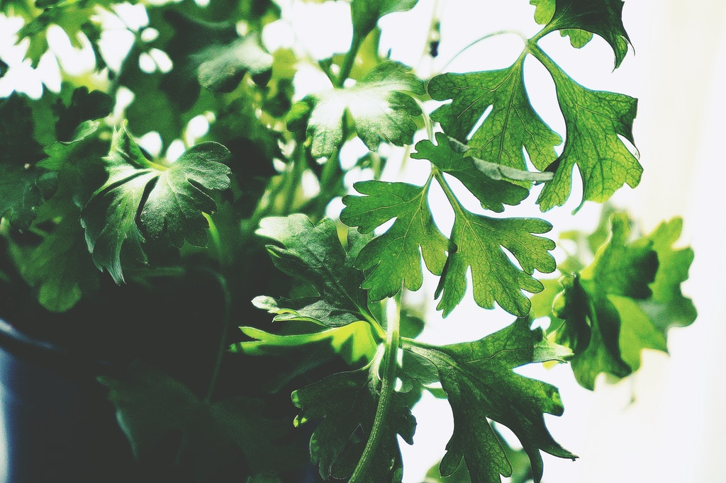 The Best Edible Plants you can Grow in your Kitchen | ecogreenlove