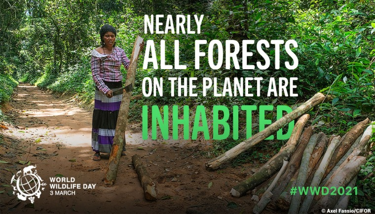 WWD - Forests and Livelihoods: Sustaining People and Planet | ecogreenlove