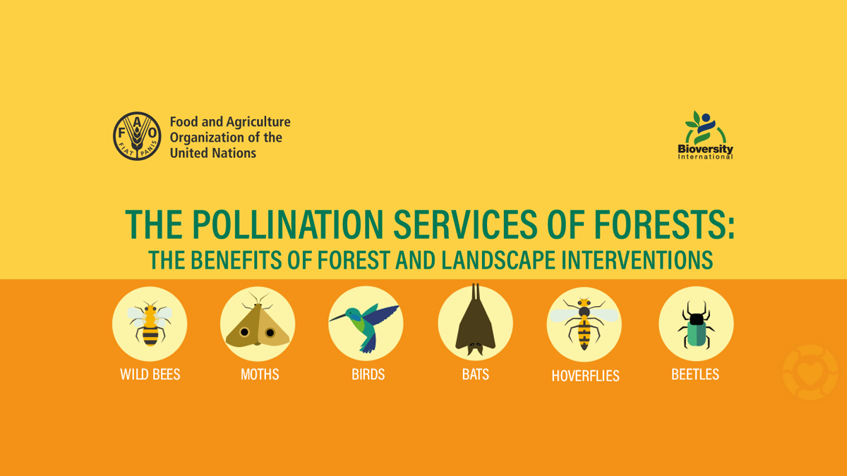 The Pollination Services of Forests [Infographic] | ecogreenlove