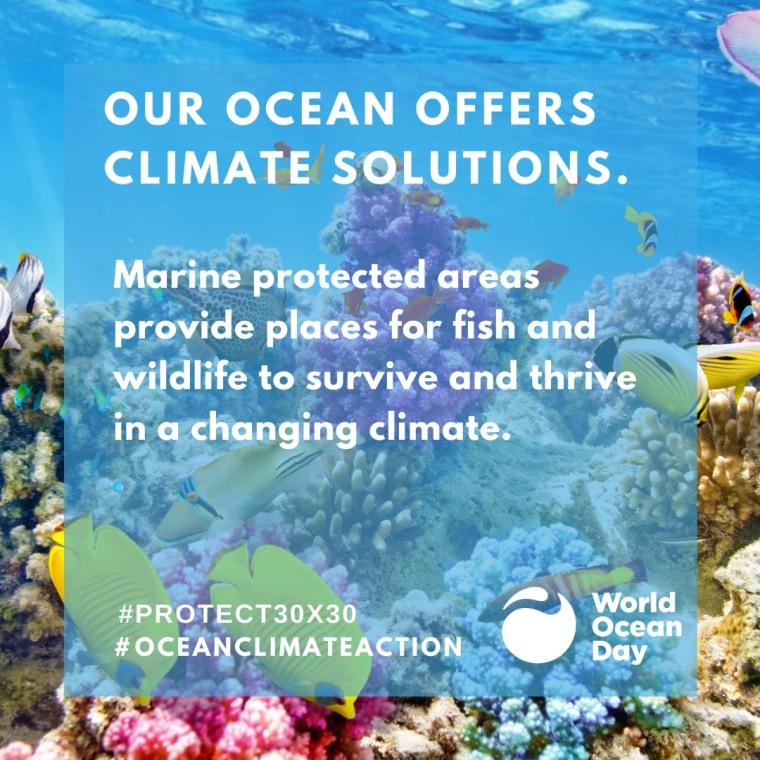 Ocean Climate Action | ecogreenlove