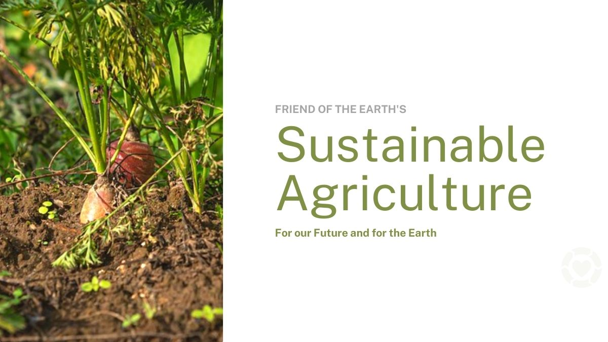 Sustainable agriculture for our future and for the earth | ecogreenlove