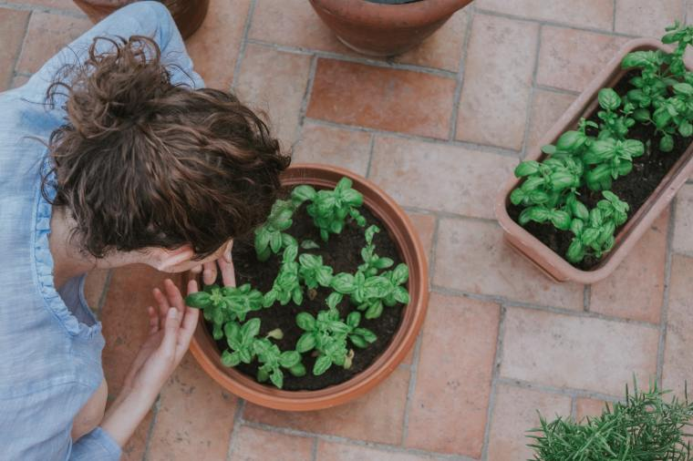 Making the Most of Your Summer's End • Gardening | ecogreenlove